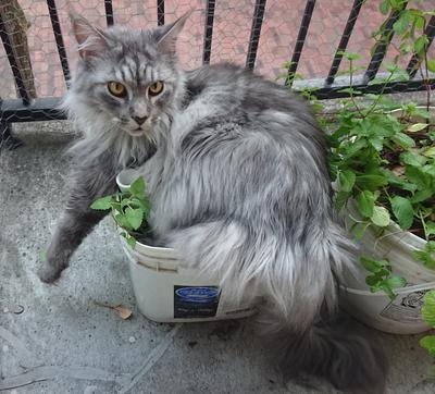 He found the catnip plant